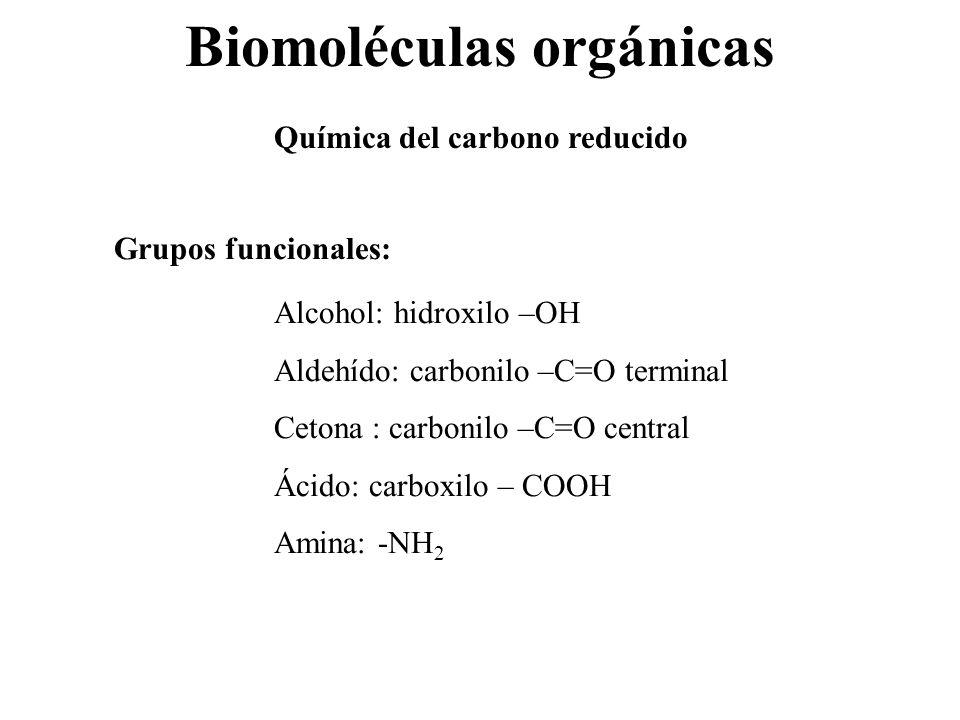 Biomoléculas orgánicas Química del carbono reducido Grupos funcionales: Alcohol: hidroxilo –OH Aldehído: carbonilo –C=O terminal Cetona : carbonilo –C