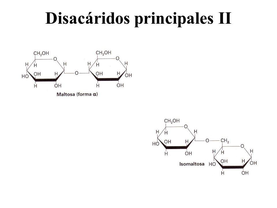 Disacáridos principales II
