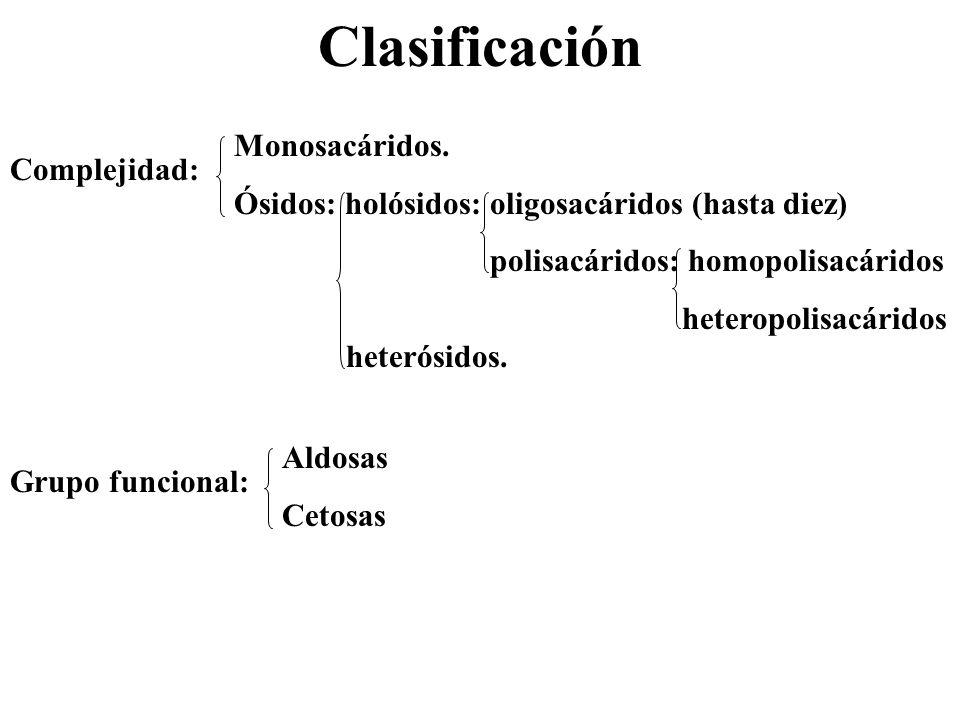 Clasificación Complejidad: Monosacáridos. Ósidos: holósidos: oligosacáridos (hasta diez) polisacáridos: homopolisacáridos heteropolisacáridos heterósi