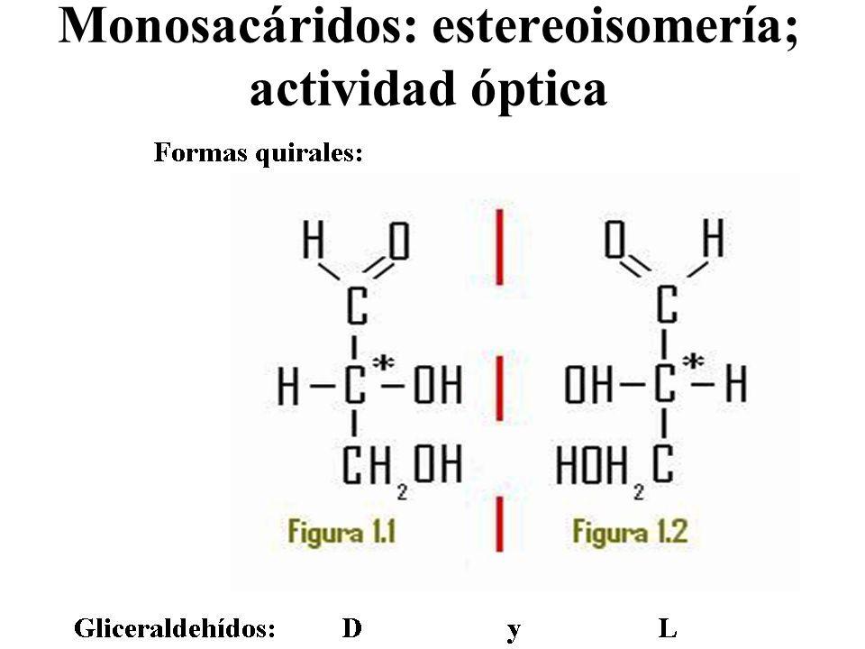 Monosacáridos: estereoisomería; actividad óptica