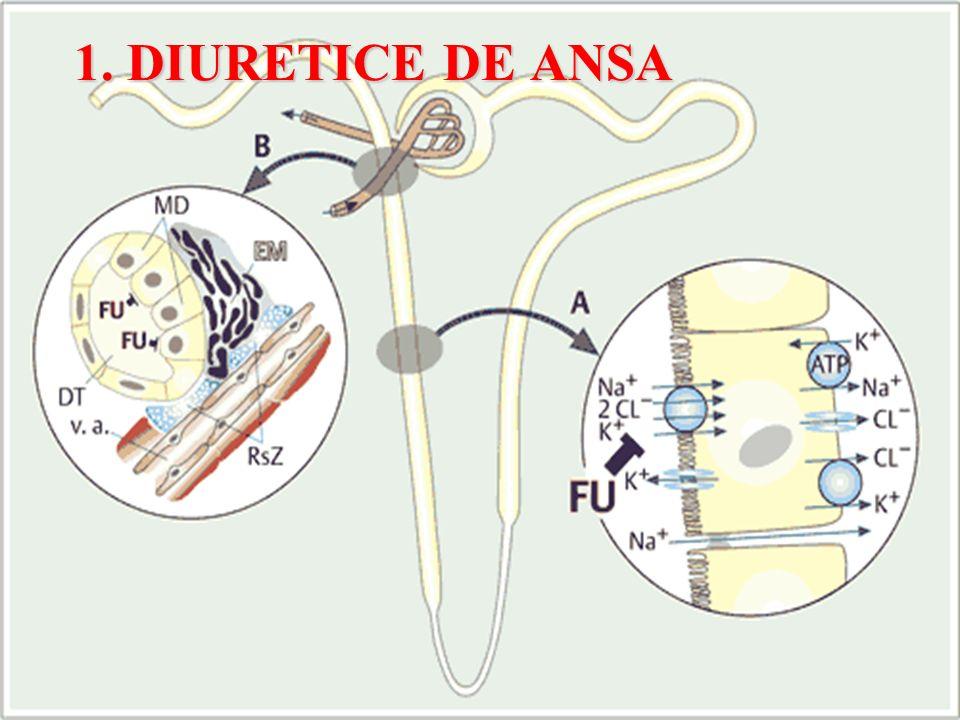 1. DIURETICE DE ANSA
