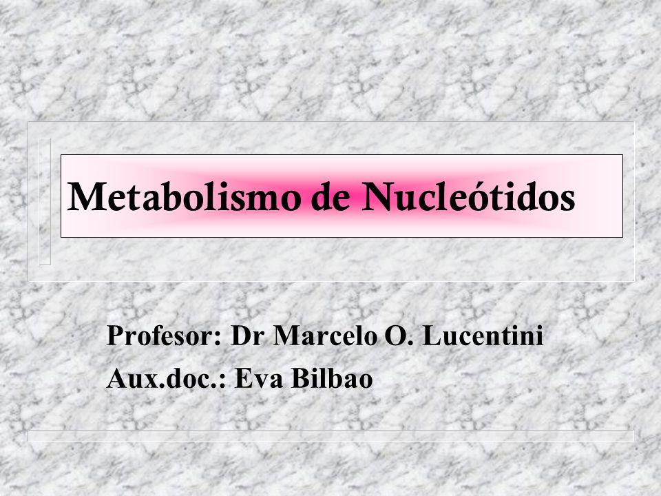 Biosíntesis de Nucleótidos de purina Ácido inosínico (IMP) + GTP GDP + Pi Aspartato Ácido Adenilosuccínico Ácido Fumárico Ácido Adenílico (AMP) Síntesis de AMP a partir de IMP