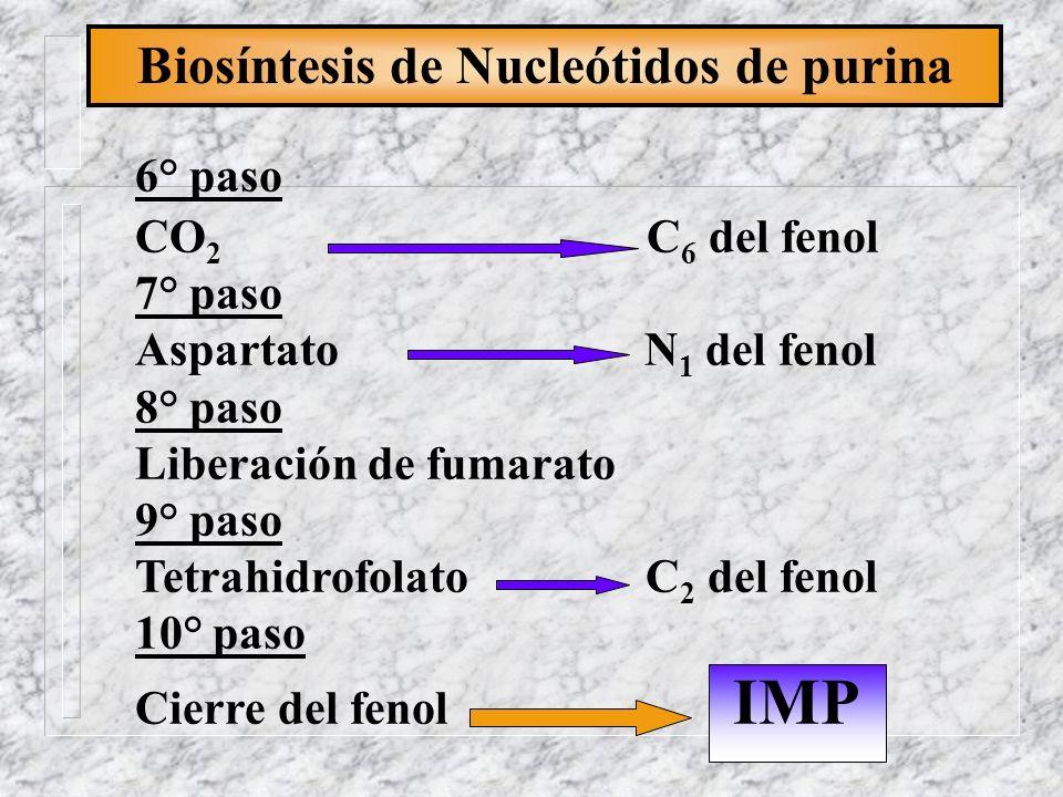 Biosíntesis de Nucleótidos de purina 6° paso CO 2 C 6 del fenol 7° paso Aspartato N 1 del fenol 8° paso Liberación de fumarato 9° paso Tetrahidrofolat