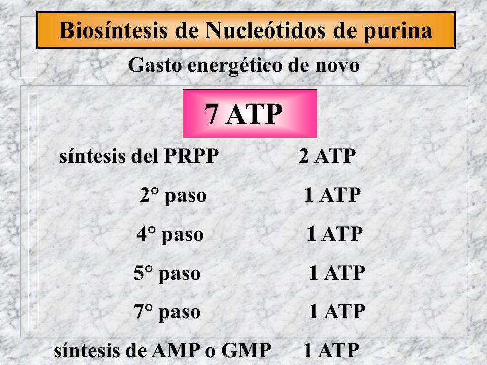Biosíntesis de Nucleótidos de purina síntesis del PRPP 2 ATP 2° paso 1 ATP 4° paso 1 ATP 5° paso 1 ATP 7° paso 1 ATP síntesis de AMP o GMP 1 ATP Gasto