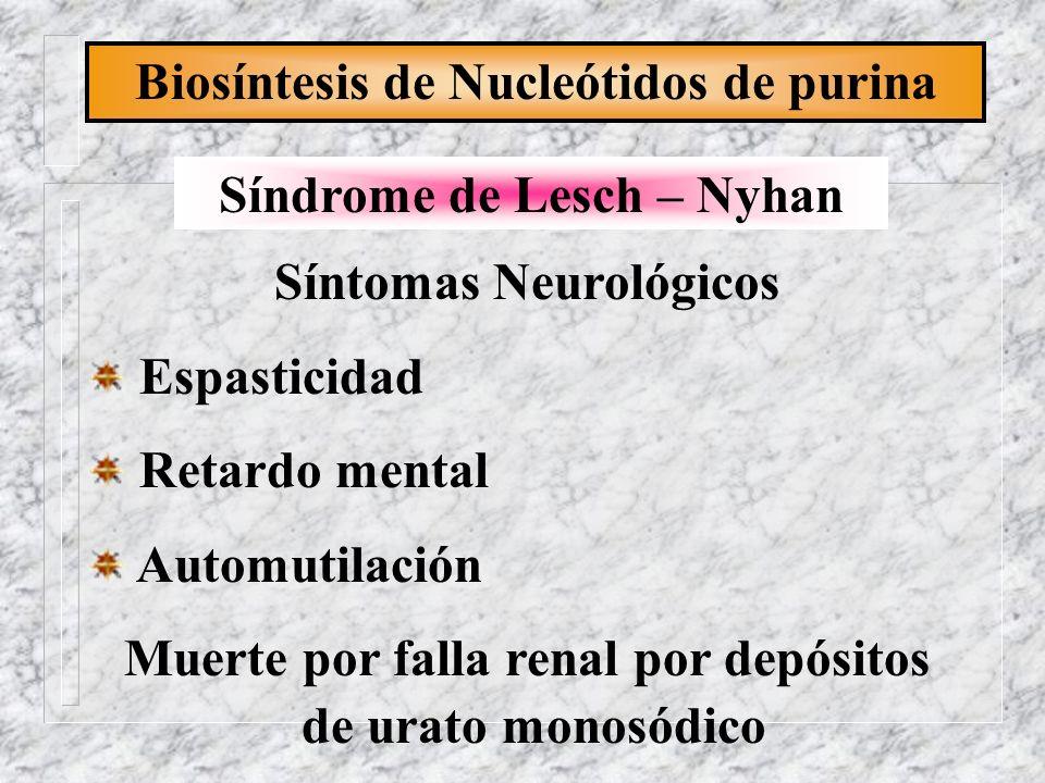 Biosíntesis de Nucleótidos de purina Síndrome de Lesch – Nyhan Síntomas Neurológicos Espasticidad Retardo mental Automutilación Muerte por falla renal