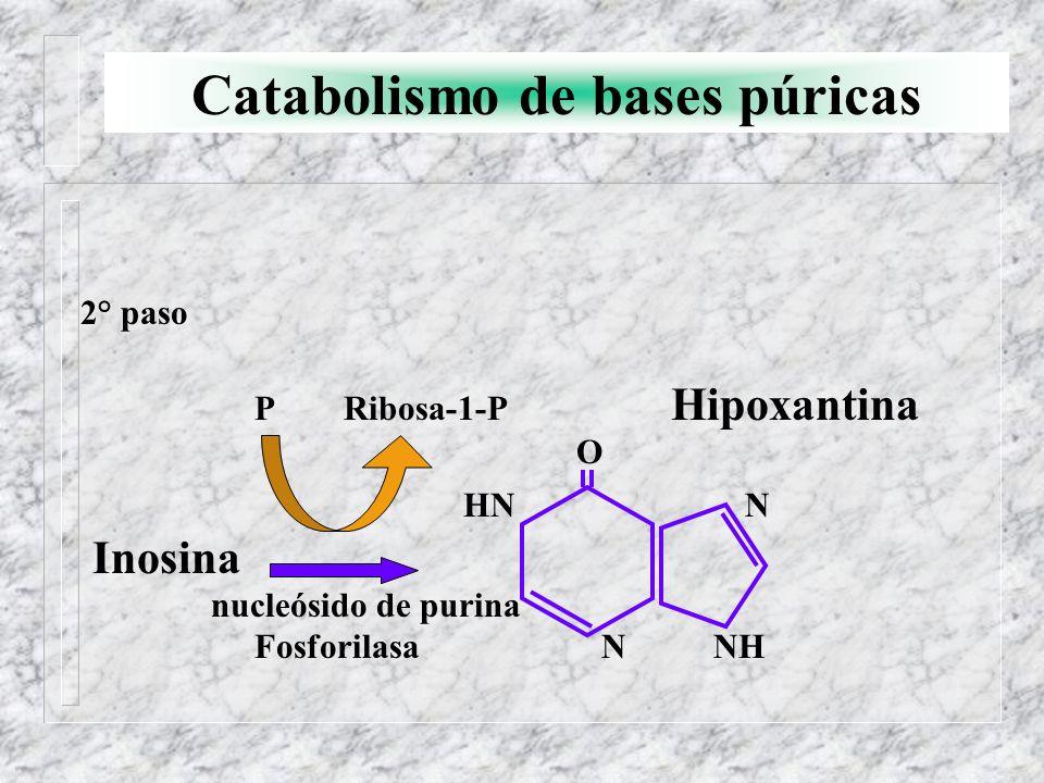 Catabolismo de bases púricas 2° paso P Ribosa-1-P Hipoxantina O HN N Inosina nucleósido de purina Fosforilasa N NH
