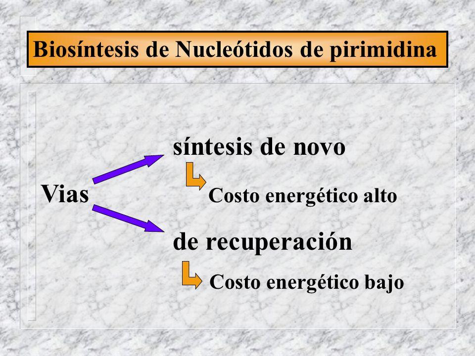 Biosíntesis de Nucleótidos de pirimidina síntesis de novo Vias Costo energético alto de recuperación Costo energético bajo