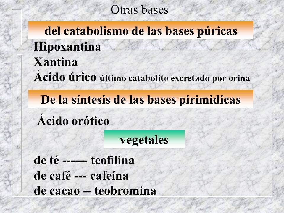 del catabolismo de las bases púricas Hipoxantina Xantina Ácido úrico último catabolito excretado por orina Otras bases vegetales de té ------ teofilin