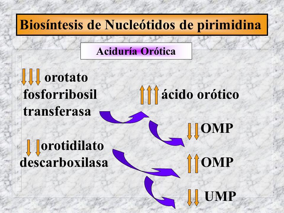 Biosíntesis de Nucleótidos de pirimidina Aciduría Orótica orotato fosforribosil ácido orótico transferasa OMP orotidilato descarboxilasa OMP UMP