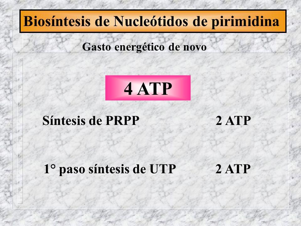 Biosíntesis de Nucleótidos de pirimidina Gasto energético de novo Síntesis de PRPP 2 ATP 1° paso síntesis de UTP 2 ATP 4 ATP