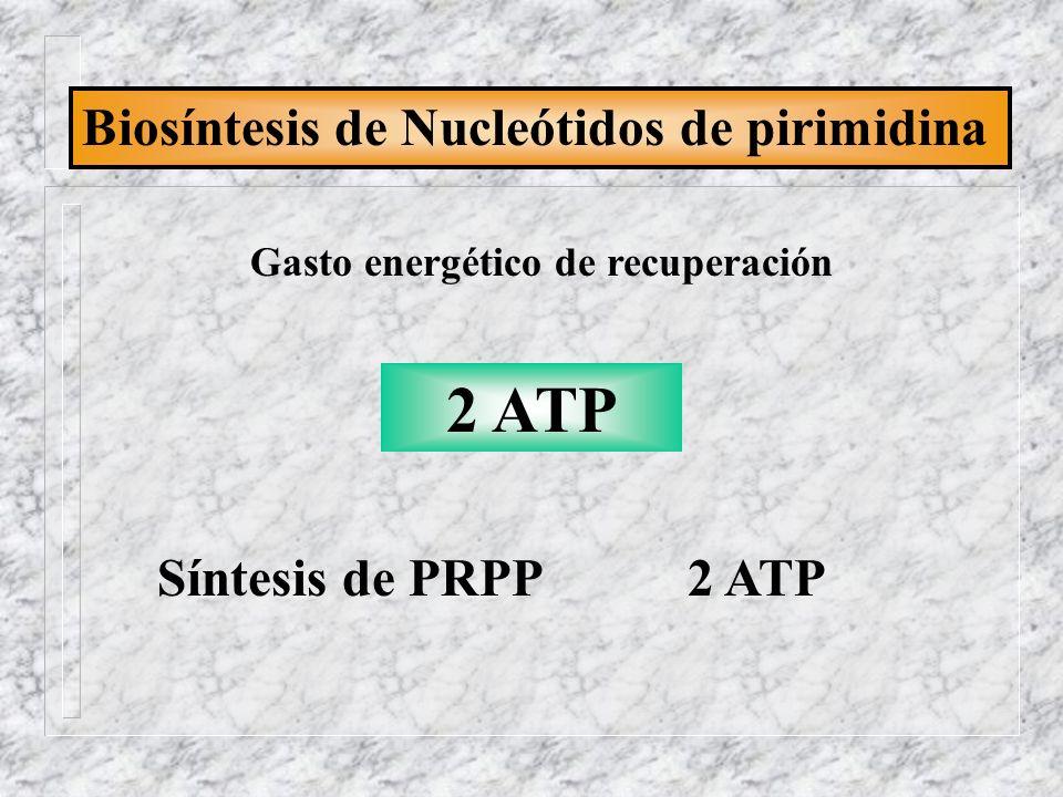 Biosíntesis de Nucleótidos de pirimidina Gasto energético de recuperación 2 ATP Síntesis de PRPP 2 ATP