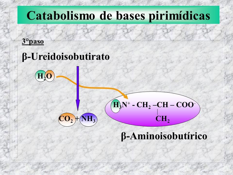 Catabolismo de bases pirimídicas 3°paso β-Ureidoisobutirato H 2 O H 3 N + - CH 2 –CH – COO - CO 2 + NH 3 CH 2 β-Aminoisobutírico
