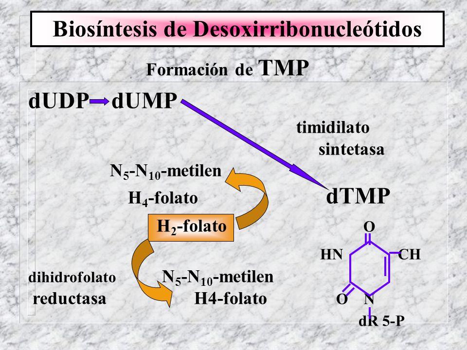 Formación de TMP dUDP dUMP timidilato sintetasa N 5 -N 10 -metilen H 4 -folato dTMP H 2 -folato O HN CH dihidrofolato N 5 -N 10 -metilen reductasa H4-
