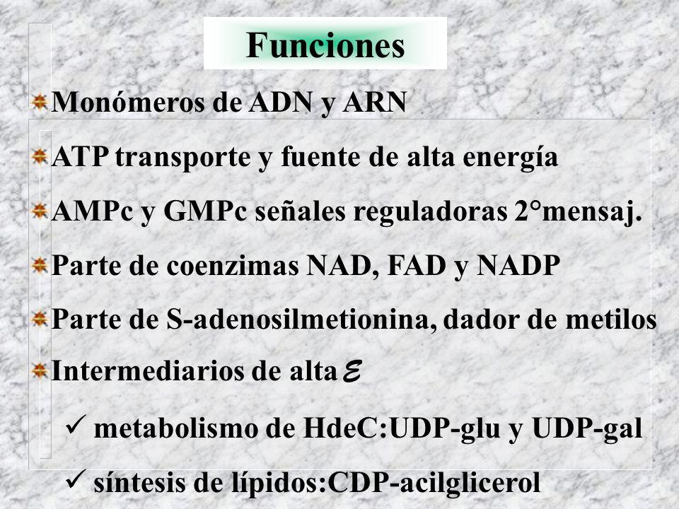 Funciones Monómeros de ADN y ARN ATP transporte y fuente de alta energía AMPc y GMPc señales reguladoras 2°mensaj. Parte de coenzimas NAD, FAD y NADP