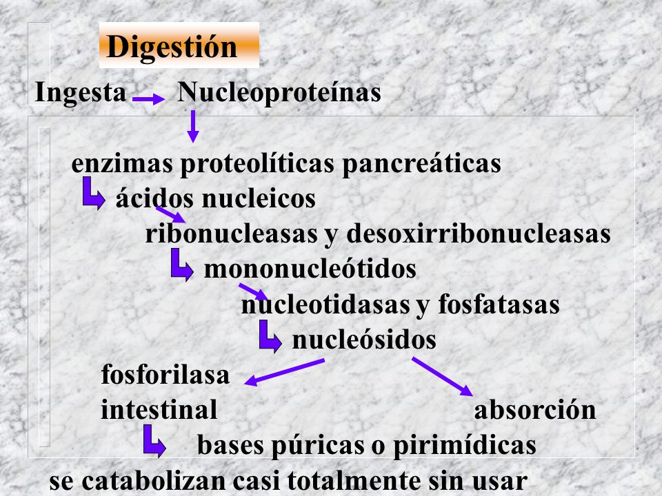 Digestión Ingesta Nucleoproteínas enzimas proteolíticas pancreáticas ácidos nucleicos ribonucleasas y desoxirribonucleasas mononucleótidos nucleotidas