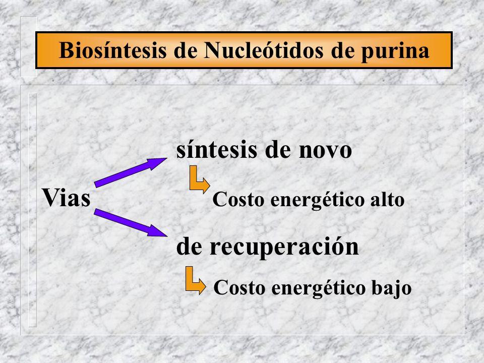 Biosíntesis de Nucleótidos de purina CO 2 respiratorio Aspartato C 6 C 5 N 7 Glicina N 1 C 8 C 2 N 5, N 10 -Meteniltetra N 3 C 4 N 9 hidrofolato N 10 -Formiltetra ribosa-P hidrofolato Amida de la glutamina De novo Procedencia de cada átomo IMP