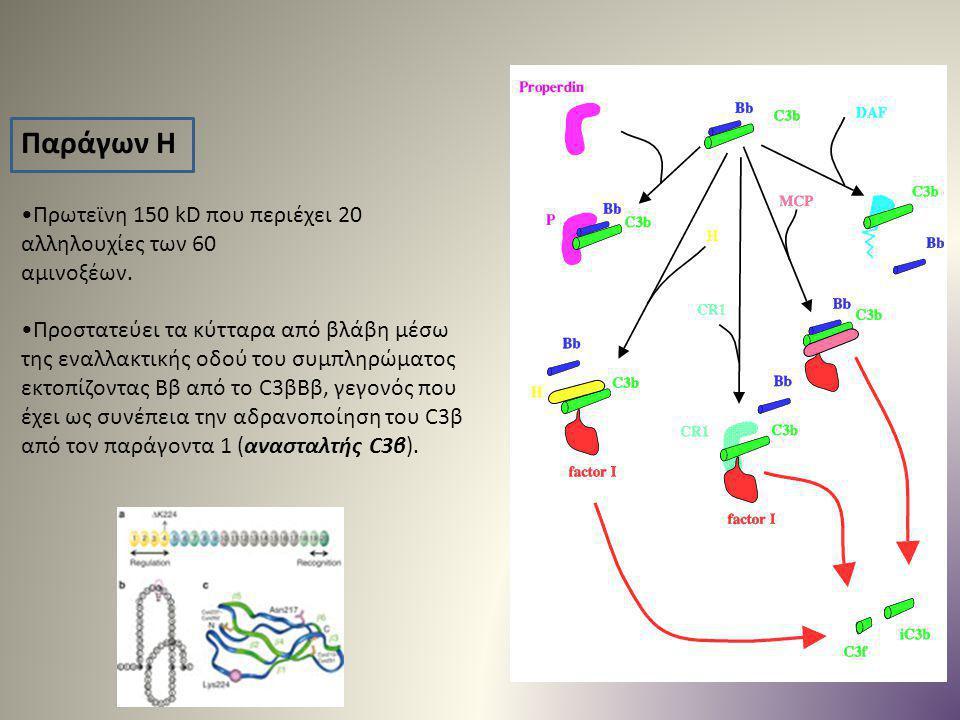 Παράγων Η Πρωτεϊνη 150 kD που περιέχει 20 αλληλουχίες των 60 αμινοξέων. Προστατεύει τα κύτταρα από βλάβη μέσω της εναλλακτικής οδού του συμπληρώματος