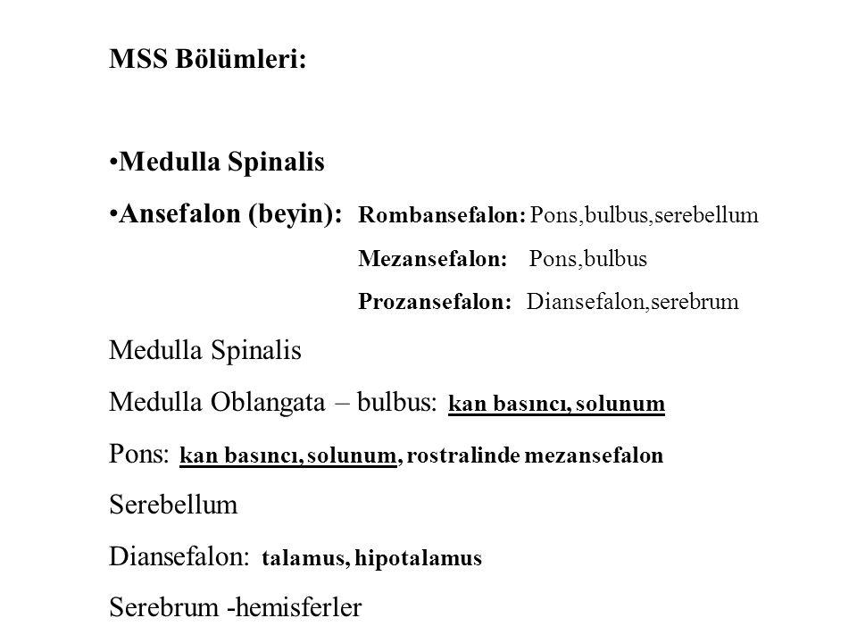 MSS Bölümleri: Medulla Spinalis Ansefalon (beyin): Rombansefalon: Pons,bulbus,serebellum Mezansefalon: Pons,bulbus Prozansefalon: Diansefalon,serebrum Medulla Spinalis Medulla Oblangata – bulbus: kan basıncı, solunum Pons: kan basıncı, solunum, rostralinde mezansefalon Serebellum Diansefalon: talamus, hipotalamus Serebrum -hemisferler