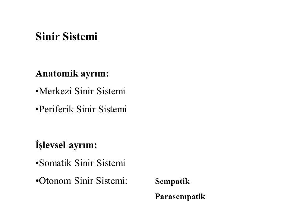 Sinir Sistemi Anatomik ayrım: Merkezi Sinir Sistemi Periferik Sinir Sistemi İşlevsel ayrım: Somatik Sinir Sistemi Otonom Sinir Sistemi: Sempatik Parasempatik