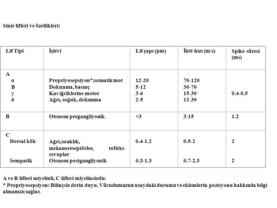 Sinir lifleri ve özellikleri: Lif TipiİşleviLif çapı (μm)İleti hızı (m/s)Spike süresi (ms) A α Β γ δ Propriyosepsiyon*;somatik mot Dokunma, basınç Kas iğciklerine motor Ağrı, soğuk, dokunma 12-20 5-12 3-6 2-5 70-120 30-70 15-30 12-30 0.4-0.5 BOtonom pregangliyonik<33-151.2 C Dorsal kök Sempatik Ağrı,sıcaklık, mekanoreseptörler, refleks cevaplar Otonom postgangliyonik 0.4-1.2 0.3-1.3 0.5-2 0.7-2.3 2 2 2 2 A ve B lifleri miyelinli, C lifleri miyelinsizdir.