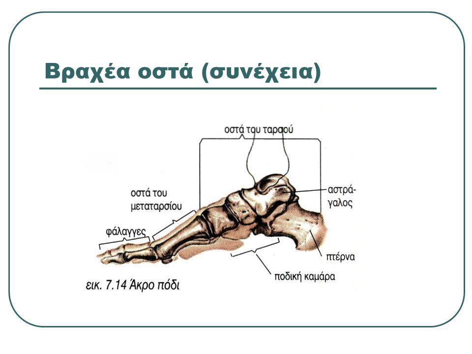 Βραχέα οστά (συνέχεια)
