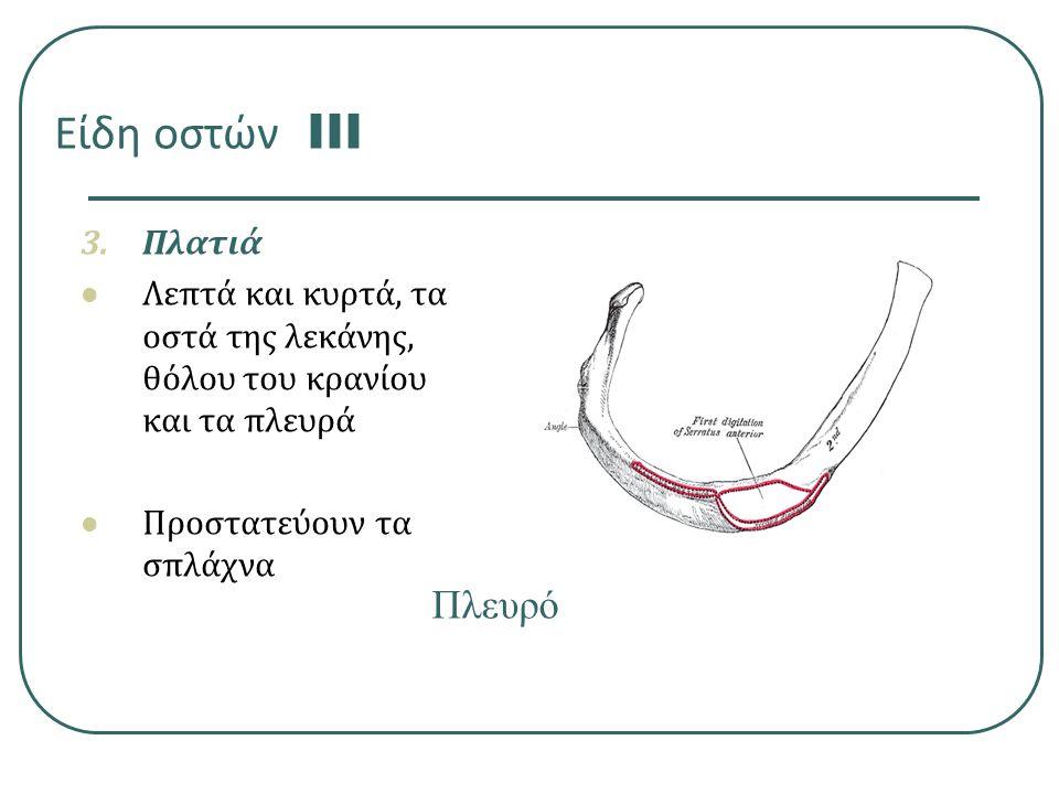 Είδη οστών III 3.Πλατιά Λεπτά και κυρτά, τα οστά της λεκάνης, θόλου του κρανίου και τα πλευρά Προστατεύουν τα σπλάχνα Πλευρό 12