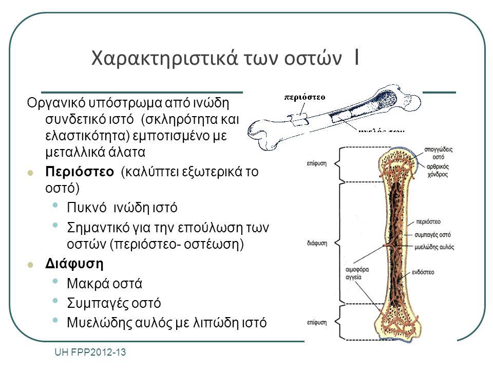 Χαρακτηριστικά των οστών ΙΙ Επίφυση Διευρυμένο άκρο των μακρών οστών (π.χ.