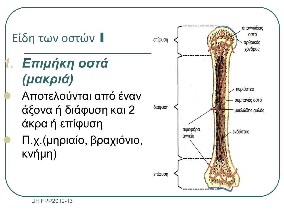 Είδη των οστών I 1.Επιμήκη οστά (μακριά) Αποτελούνται από έναν άξονα ή διάφυση και 2 άκρα ή επίφυση Π.χ.(μηριαίο, βραχιόνιο, κνήμη) UH FPP2012-13 9