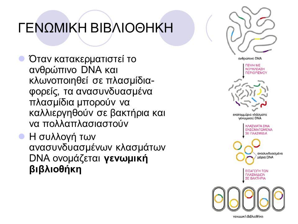 ΓΕΝΩΜΙΚΗ ΒΙΒΛΙΟΘΗΚΗ Όταν κατακερματιστεί το ανθρώπινο DNA και κλωνοποιηθεί σε πλασμίδια- φορείς, τα ανασυνδυασμένα πλασμίδια μπορούν να καλλιεργηθούν