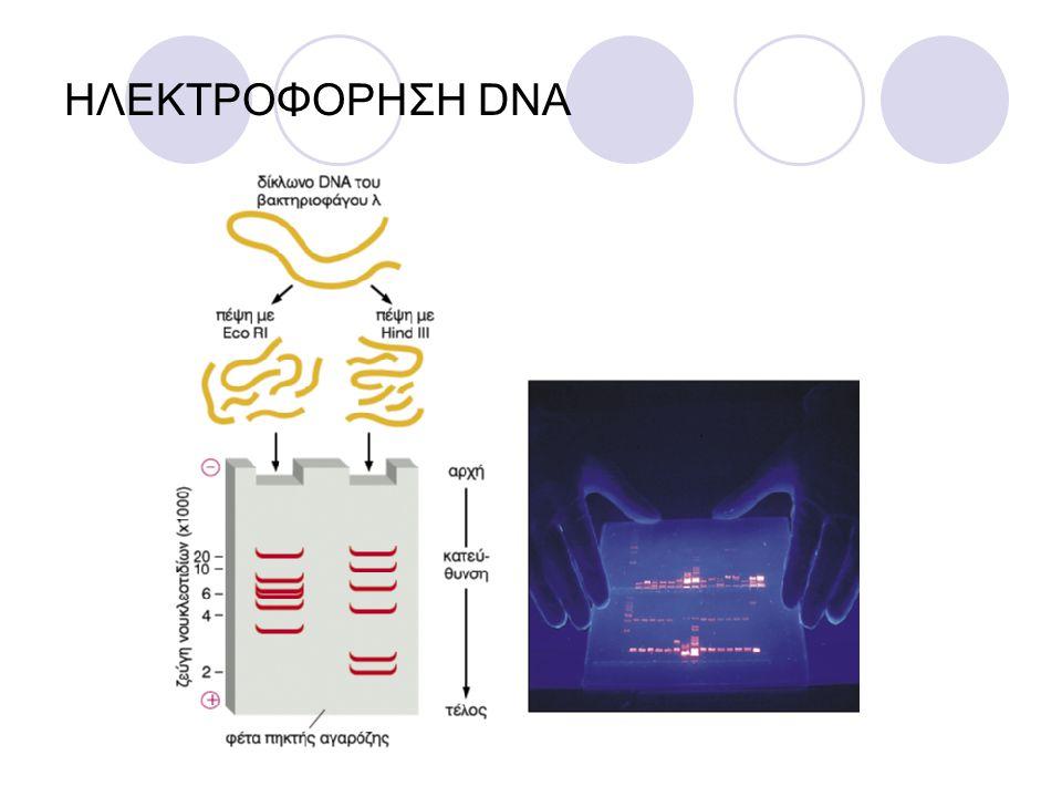 ΥΒΡΙΔΙΣΜΟΣ ΝΟΥΚΛΕÏΝΙΚΩΝ ΟΞΕΩΝ Εφόσον ένας κλώνος DNA μπορεί να ζευγαρώσει με ένα συμπληρωματικό κλώνο η ιδιότητα αυτή μπορεί να χρησιμοποιηθεί στην τεχνική του υβριδισμού Οι δεσμοί υδρογόνου μεταξύ των κλώνων μπορούν να διασπαστούν με θέρμανση ή αλλαγή του pH Αν η διαδικασία αναστραφεί, οι συμπληρωματικοί κλώνοι ξανασχηματίζουν διπλές έλικες Αυτή η αναδιάταξη ονομάζεται υβριδισμός