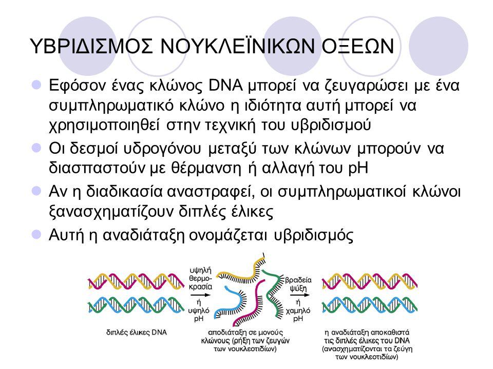 ΥΒΡΙΔΙΣΜΟΣ ΝΟΥΚΛΕÏΝΙΚΩΝ ΟΞΕΩΝ Εφόσον ένας κλώνος DNA μπορεί να ζευγαρώσει με ένα συμπληρωματικό κλώνο η ιδιότητα αυτή μπορεί να χρησιμοποιηθεί στην τε