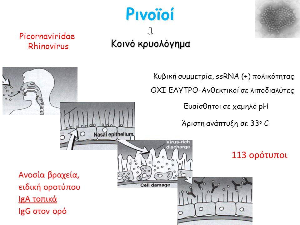 Ρινοϊοί Κοινό κρυολόγημα 113 ορότυποι Ανοσία βραχεία, ειδική οροτύπου IgA τοπικά IgG στον ορό ΟΧΙ ΕΛΥΤΡΟ-Ανθεκτικοί σε λιποδιαλύτες Ευαίσθητοι σε χαμη