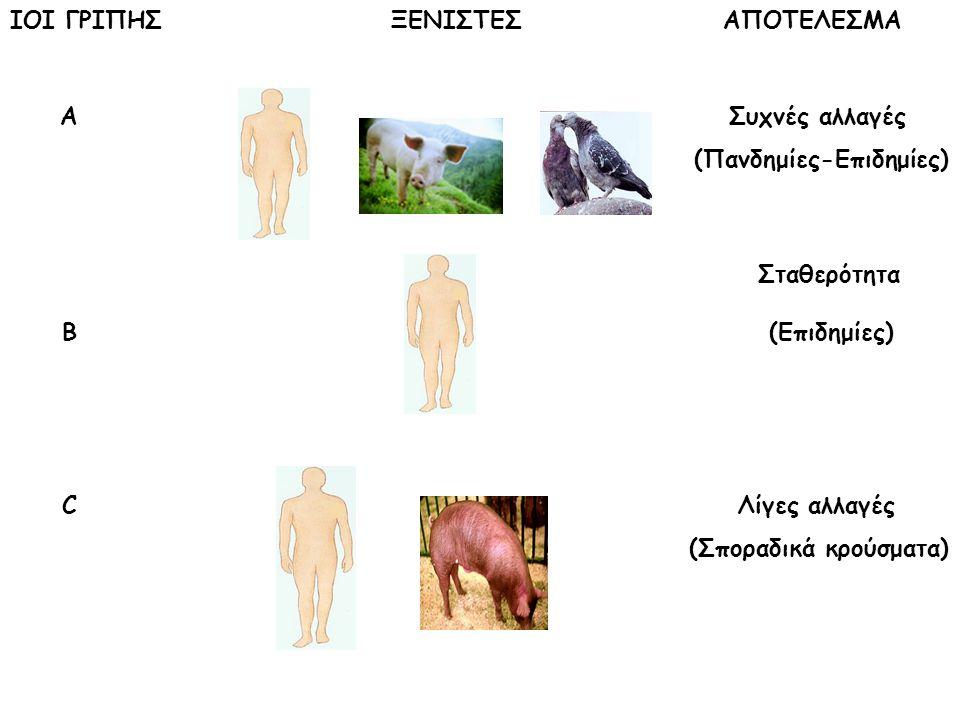 ΙΟΙ ΓΡΙΠΗΣ ΞΕΝΙΣΤΕΣ ΑΠΟΤΕΛΕΣΜΑ Α Συχνές αλλαγές (Πανδημίες-Επιδημίες) Σταθερότητα Β (Επιδημίες) C Λίγες αλλαγές (Σποραδικά κρούσματα)