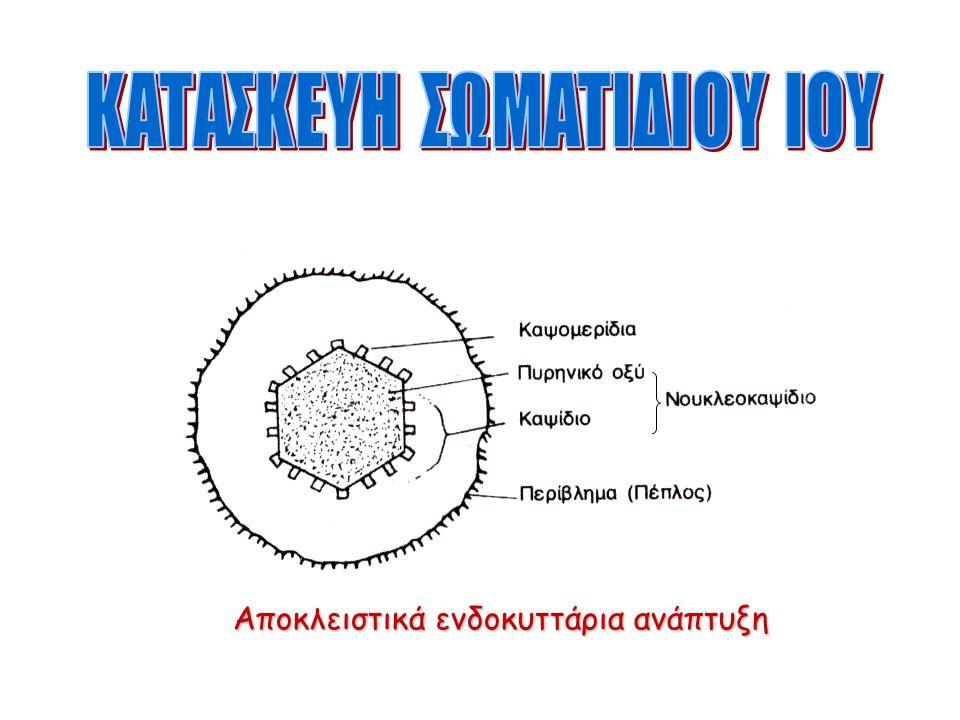 Κατασκευή Αποκλειστικά ενδοκυττάρια ανάπτυξη