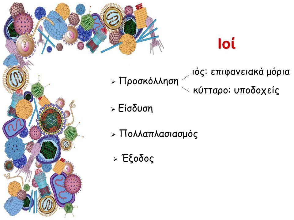  Είσδυση  Πολλαπλασιασμός  Έξοδος ιός: επιφανειακά μόρια  Προσκόλληση κύτταρο: υποδοχείςΙοί