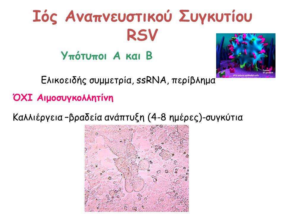 Ιός Αναπνευστικού Συγκυτίου RSV Υπότυποι Α και Β Ελικοειδής συμμετρία, ssRNA, περίβλημα ΌΧΙ Αιμοσυγκολλητίνη Καλλιέργεια –βραδεία ανάπτυξη (4-8 ημέρες