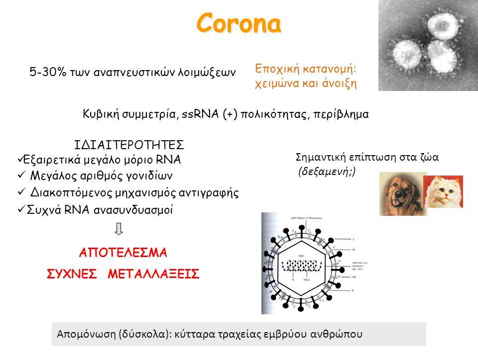 Corona Κυβική συμμετρία, ssRNA (+) πολικότητας, περίβλημα Σημαντική επίπτωση στα ζώα (δεξαμενή;) 5-30% των αναπνευστικών λοιμώξεων ΙΔΙΑΙΤΕΡΟΤΗΤΕΣ Εξαι
