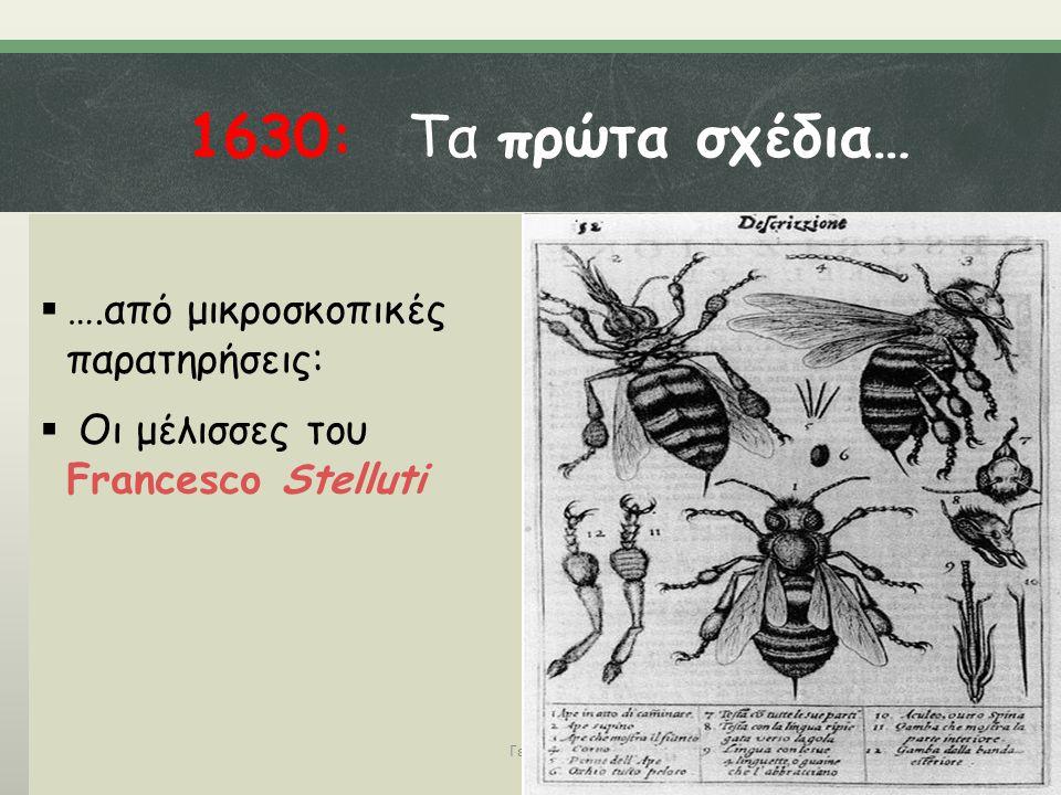 1630: Τα πρώτα σχέδια…  ….από μικροσκοπικές παρατηρήσεις:  Οι μέλισσες του Francesco Stelluti Γεωργάτου Μ.