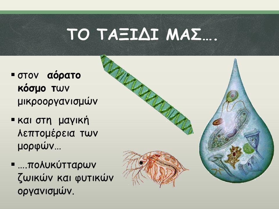 ΤΟ ΤΑΞΙΔΙ ΜΑΣ….  στον αόρατο κόσμο των μικροοργανισμών  και στη μαγική λεπτομέρεια των μορφών…  ….πολυκύτταρων ζωικών και φυτικών οργανισμών.