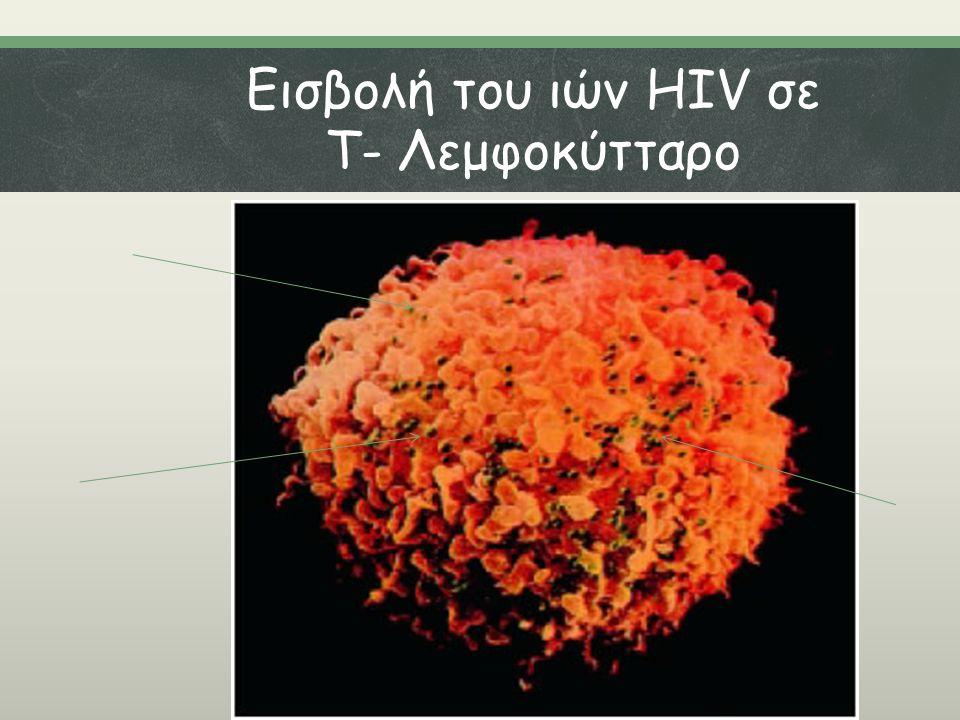 Εισβολή του ιών HIV σε Τ- Λεμφοκύτταρο
