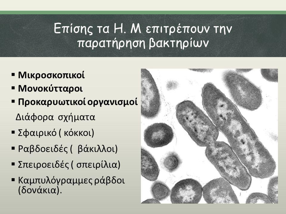 Επίσης τα Η. Μ επιτρέπουν την παρατήρηση βακτηρίων  Μικροσκοπικοί  Μονοκύτταροι  Προκαρυωτικοί οργανισμοί Διάφορα σχήματα  Σφαιρικό ( κόκκοι)  Ρα