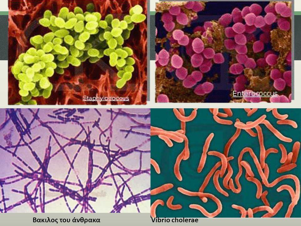 Vibrio choleraeΒακιλος του άνθρακα