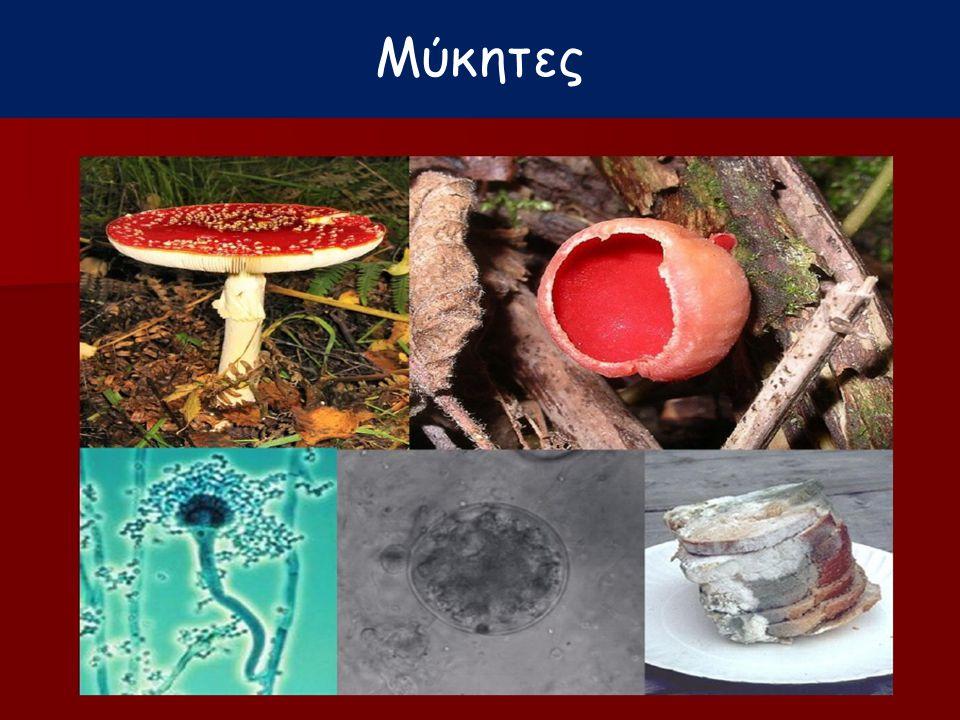 Γεωργάτου Μ. Μύκητες