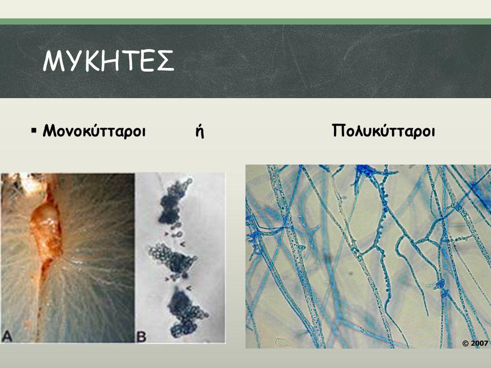 MΥKHTEΣ  Μονοκύτταροι ή Πολυκύτταροι