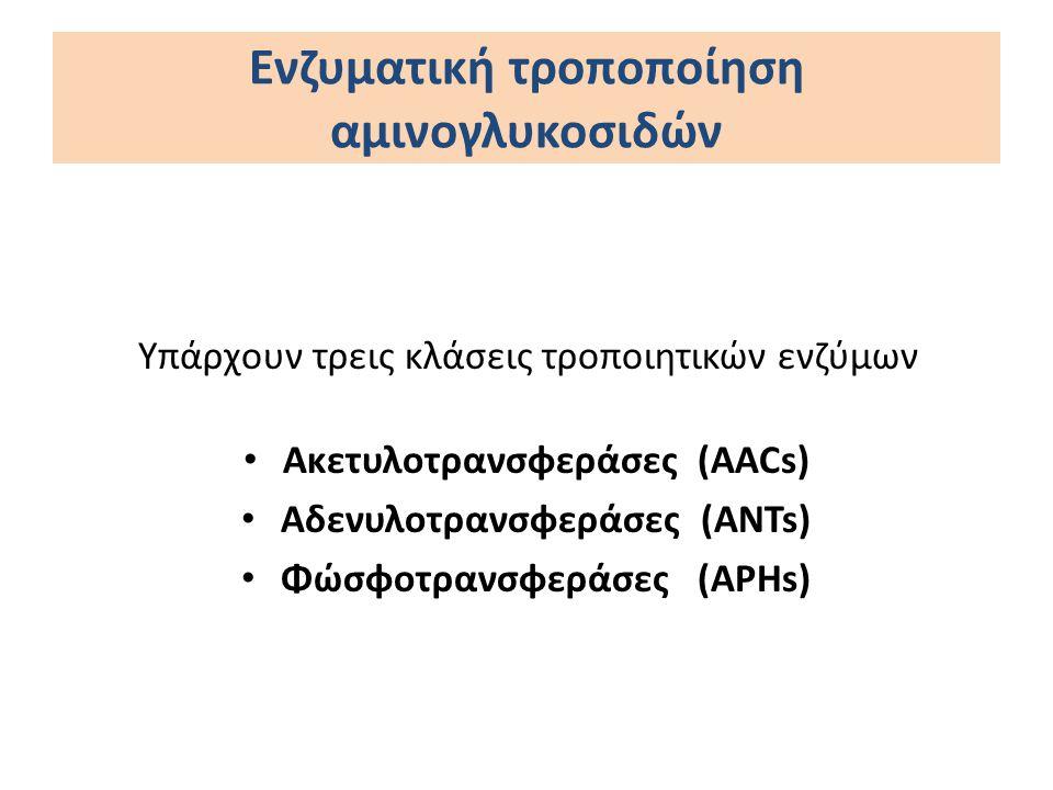 Υπάρχουν τρεις κλάσεις τροποιητικών ενζύμων Ακετυλοτρανσφεράσες (AACs) Αδενυλοτρανσφεράσες (ANTs) Φώσφοτρανσφεράσες (APHs) Ενζυματική τροποποίηση αμιν