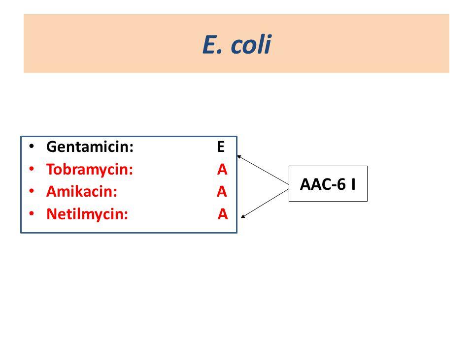 Ε. coli Gentamicin: E Tobramycin: Α Amikacin: Α Netilmycin:Α AAC-6 I