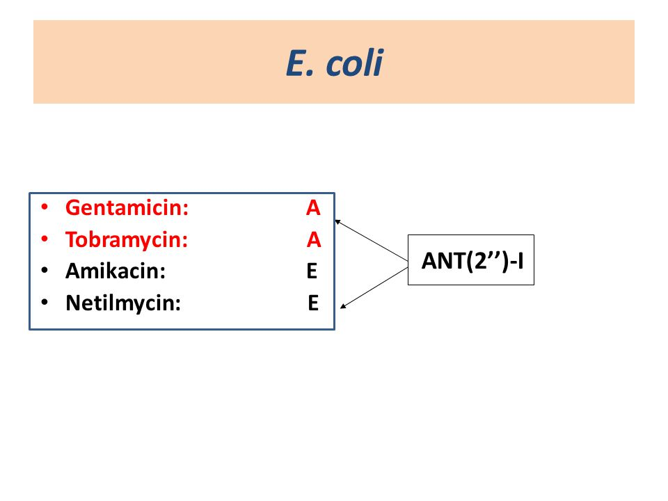 Ε. coli Gentamicin: A Tobramycin: Α Amikacin: E Netilmycin:E ANT(2'')-I