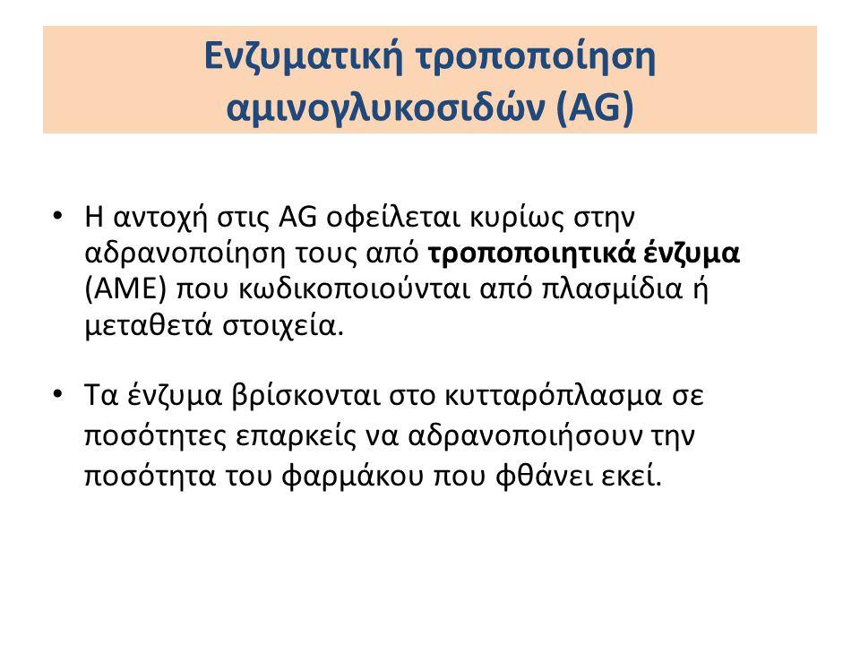 Ενζυματική τροποποίηση αμινογλυκοσιδών (AG) Η αντοχή στις AG οφείλεται κυρίως στην αδρανοποίηση τους από τροποποιητικά ένζυμα (ΑΜΕ) που κωδικοποιούντα