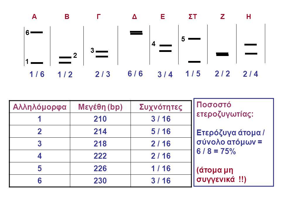 1 2 3 4 5 6 1 / 6 1 / 2 2 / 3 6 / 6 3 / 4 1 / 5 2 / 2 2 / 4 AλληλόμορφαΜεγέθη (bp)Συχνότητες 12103 / 16 22145 / 16 32182 / 16 42222 / 16 52261 / 16 62303 / 16 Ποσοστό ετεροζυγωτίας: Ετερόζυγα άτομα / σύνολο ατόμων = 6 / 8 = 75% (άτομα μη συγγενικά !!) Α Β Γ Δ Ε ΣΤ Ζ Η