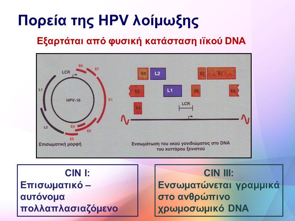 Πορεία της HPV λοίμωξης Εξαρτάται από φυσική κατάσταση ιϊκού DNA CIN I: Επισωματικό – αυτόνομα πολλαπλασιαζόμενο CIN IΙΙ: Ενσωματώνεται γραμμικά στο α